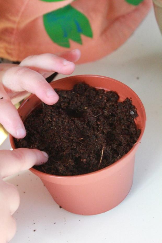 plantsaseed03